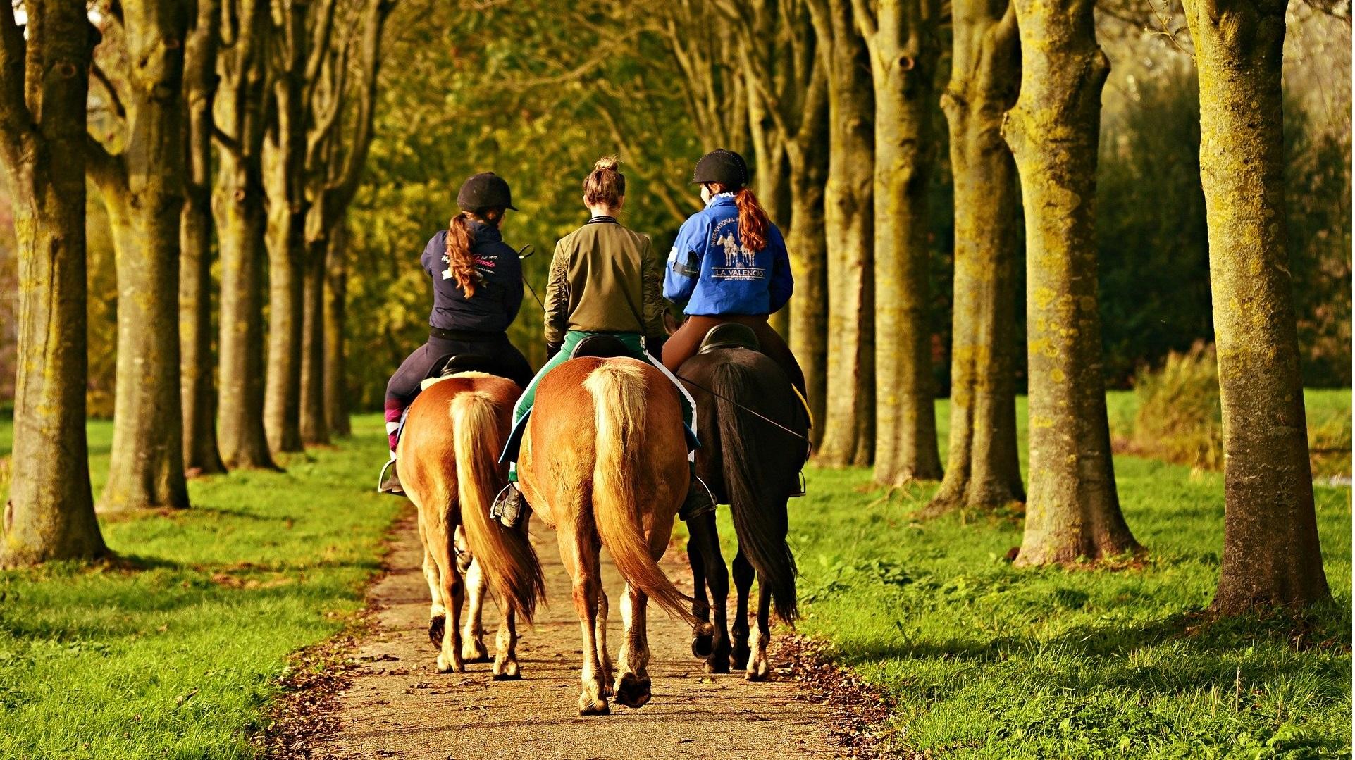 horse-rider-3807396_1920